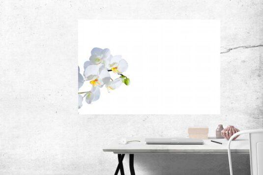 Wandbild weiße Orchidee