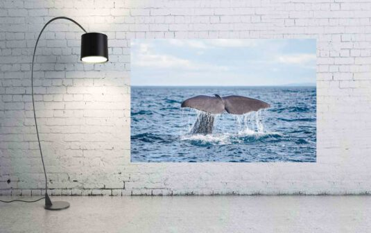 Wandbild Wal