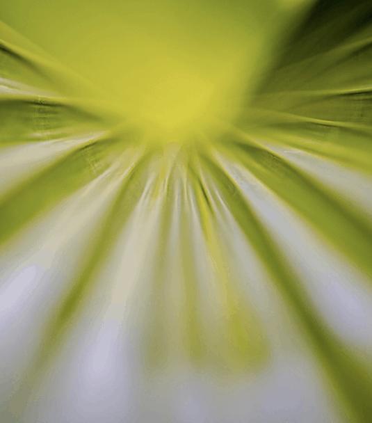 Wandbild Green Leaf