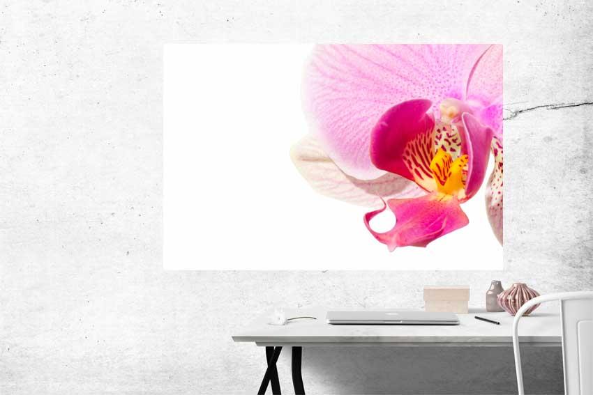 Wandbild pinke Orchidee