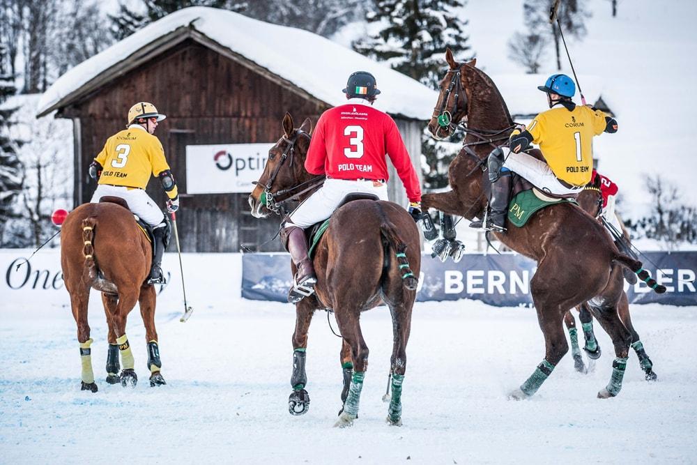 Pferde im Schnee beim Polo