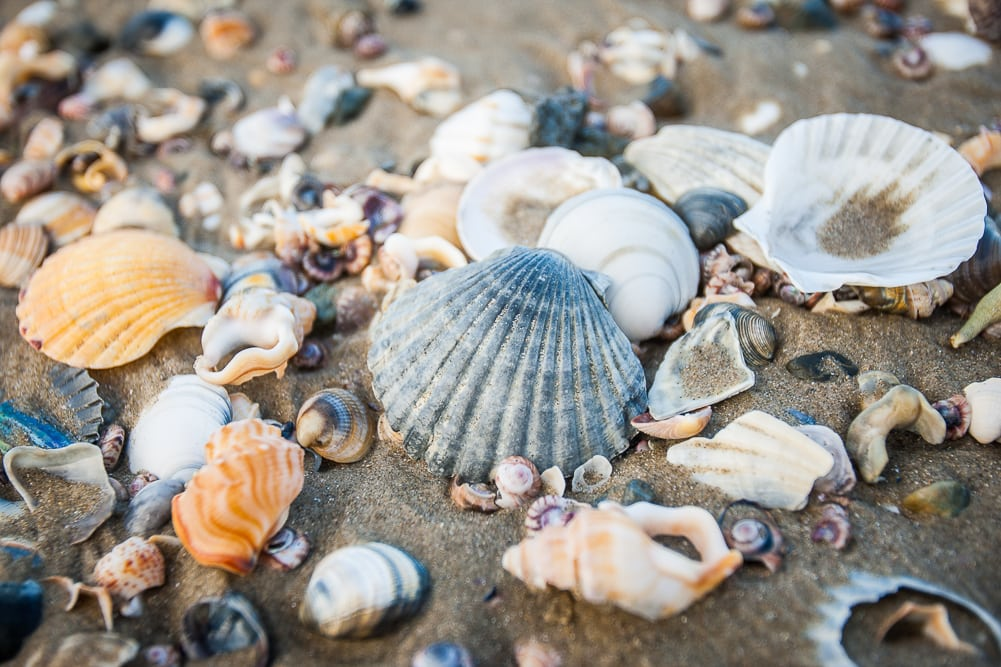 Reiseblog Neuseeland, Shelly Beach