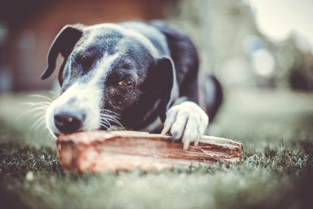 Hund mit Holzstück