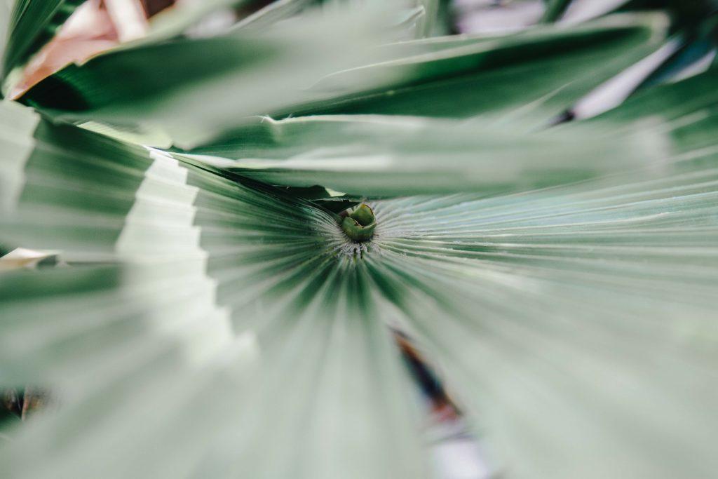 grünes Palmenblatt