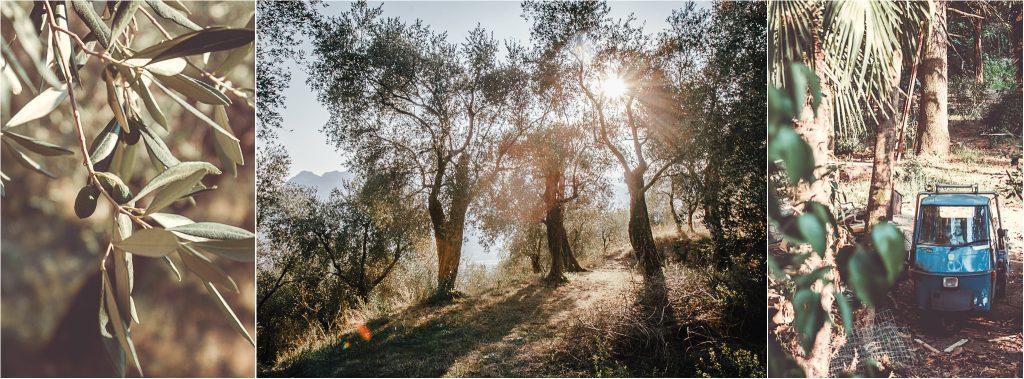 Sonnenuntergang in den Olivenhainen mit einer Ape