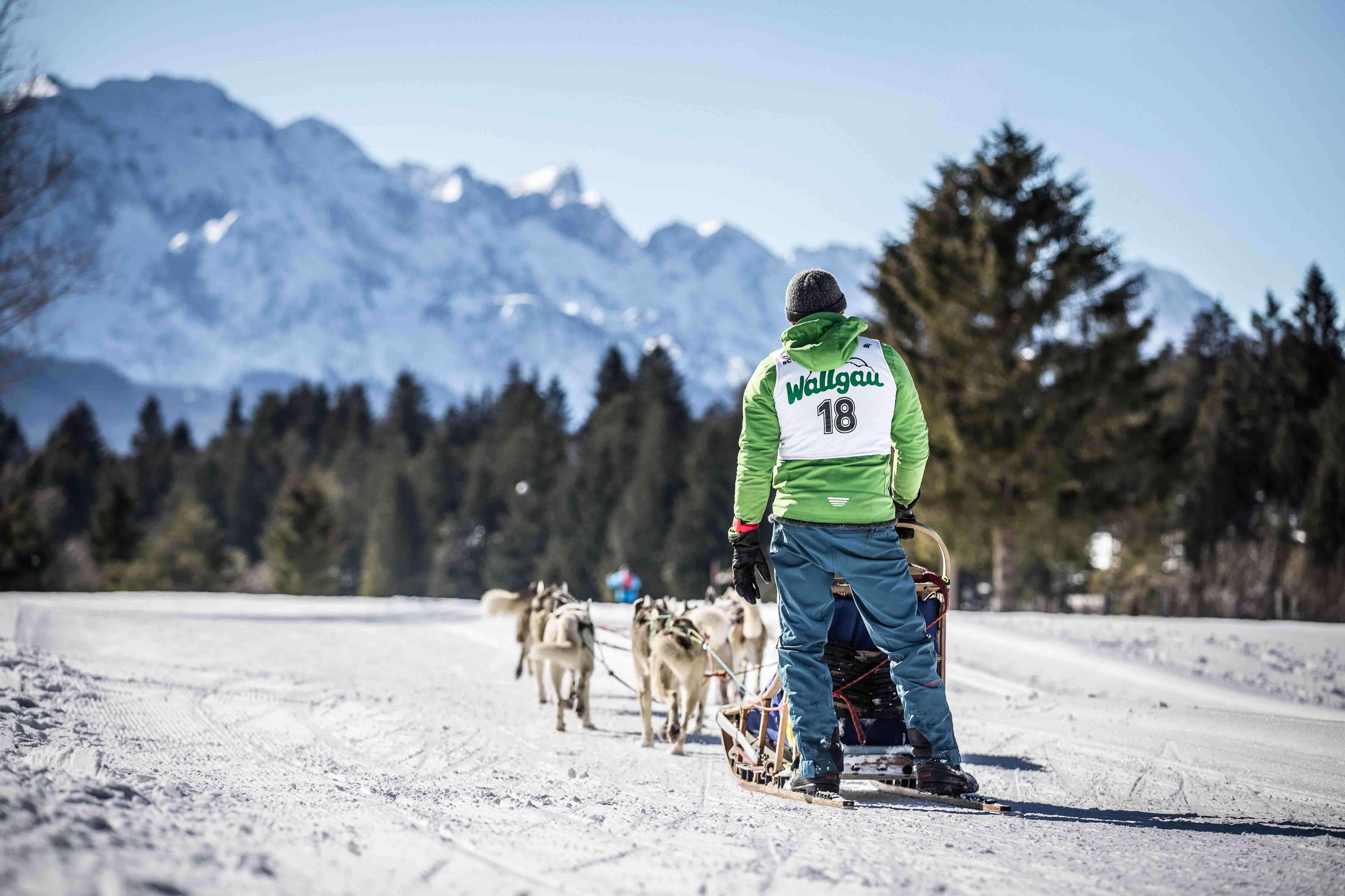 Internationales Schlittenhunderennen Wallgau