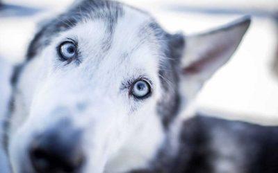 Hundefotografie – Tipps und Tricks