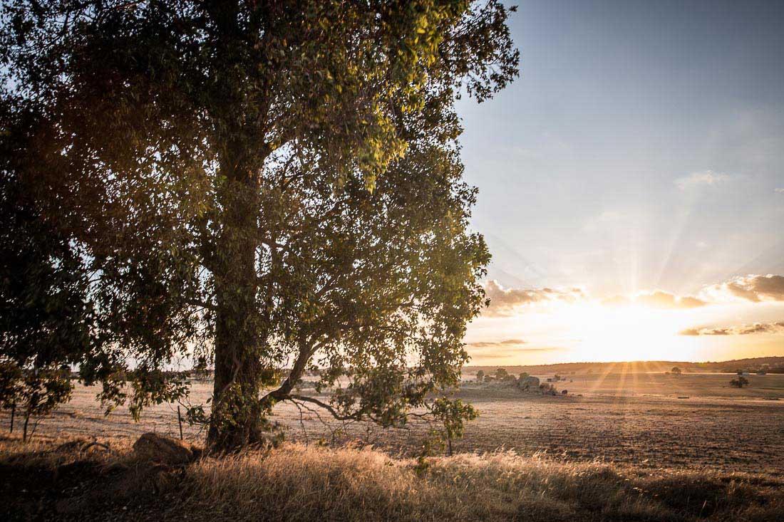Sonnenuntergang im australischen Outback