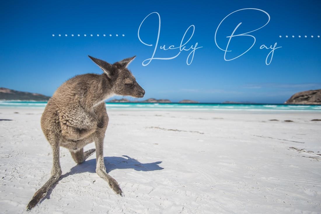 Lucky Bay – Der schönste Strand Australiens