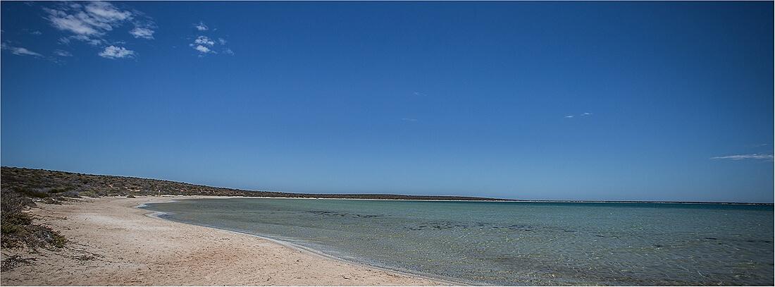 Shell Beach Monkey Australien