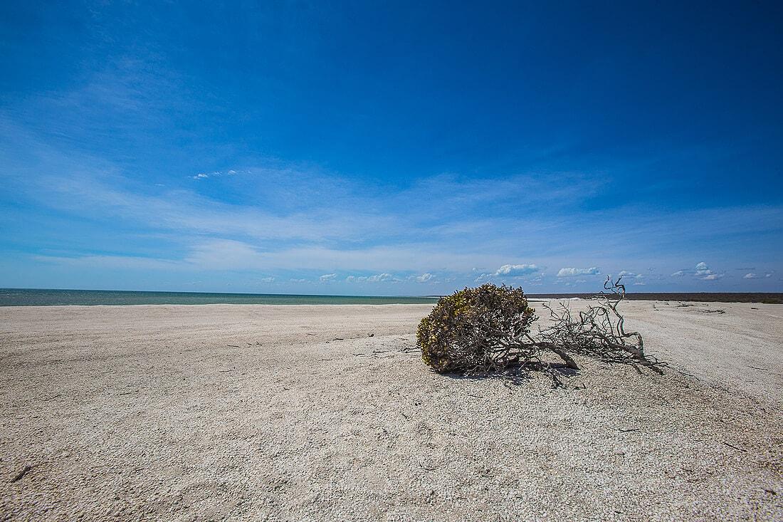 Stauch am Strand vom Shell Beach Australien