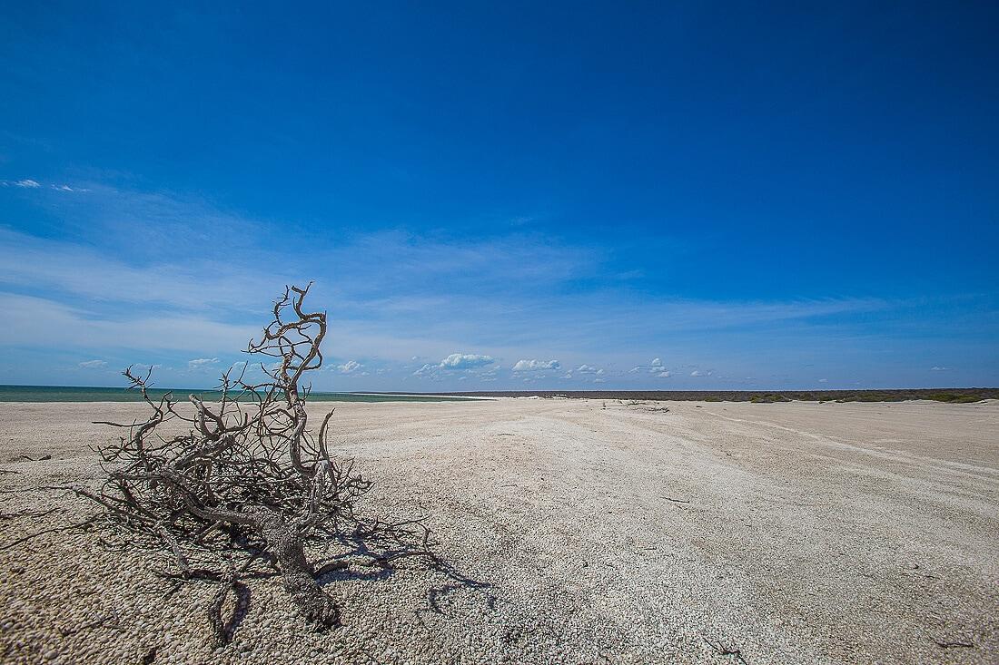 Strand von Shell Beach im Francois Person Nationalpark Australien