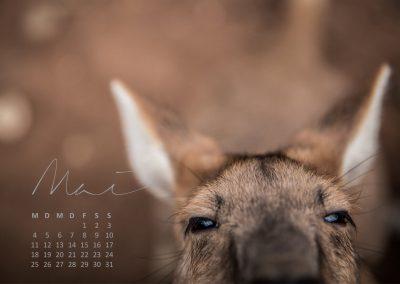 Kalender 2020 Australien - Mai