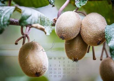 Kalender Neuseeland Monat Juli