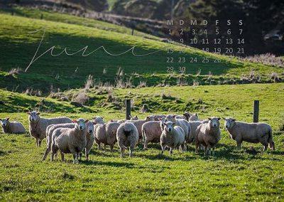 Kalender Neuseeland Monat Juni
