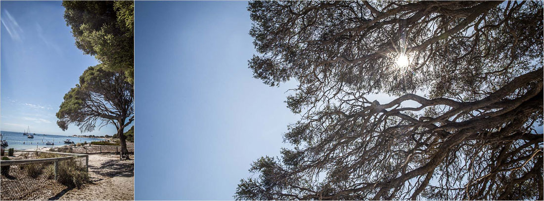 Bäume auf Rottnest Island