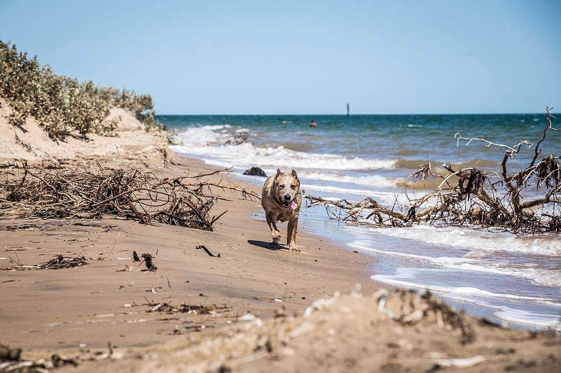 Hund am Strand von West Australien