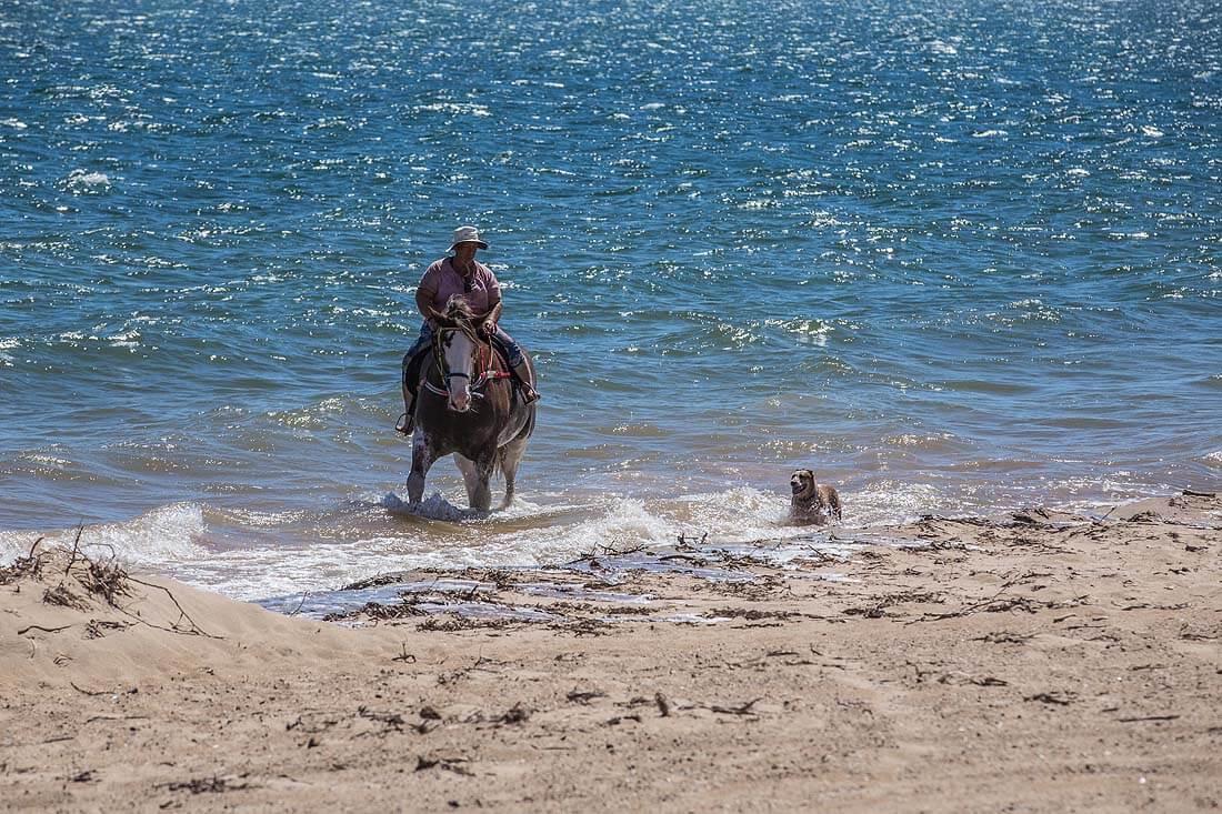Reiterin und Pferd kommen aus dem Meer