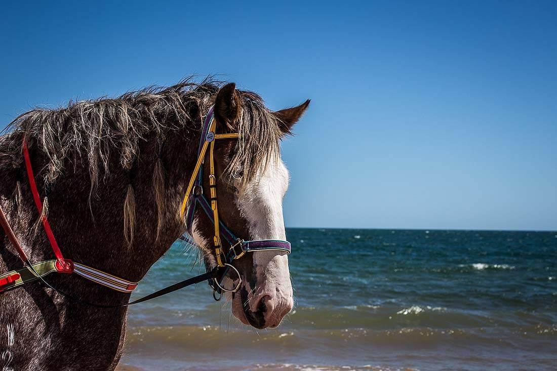 Pferd mit Meer im Hintergrund