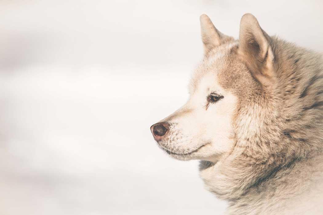 Hundefotografie neutraler Hintergrund