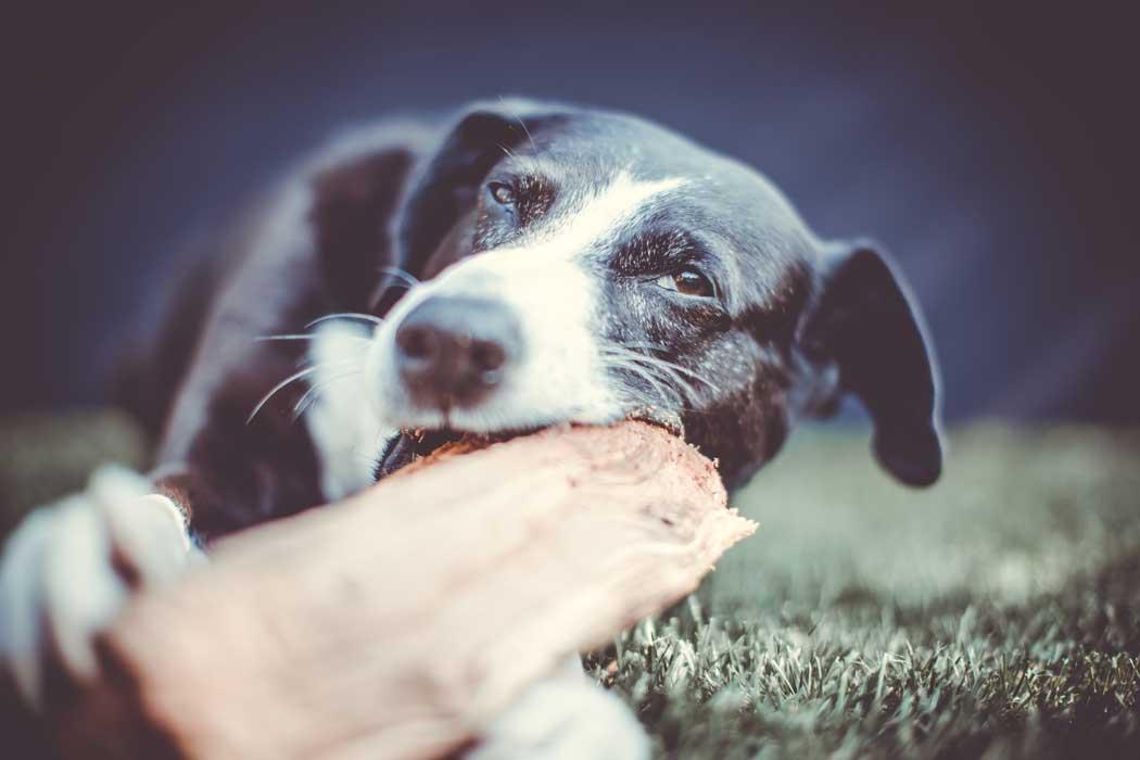 Hundefotografie Tipps