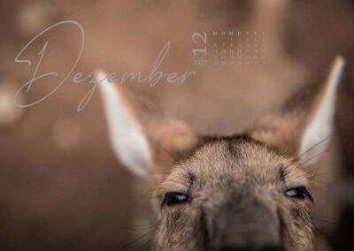 Kalender 2021 Australien Dezember